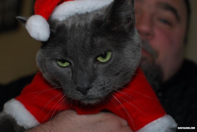 cat-in-santa-hat