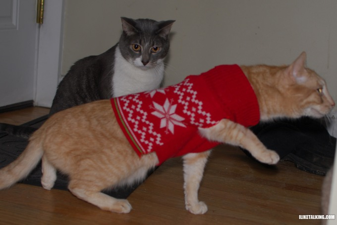 cat-shocked-by-sweater
