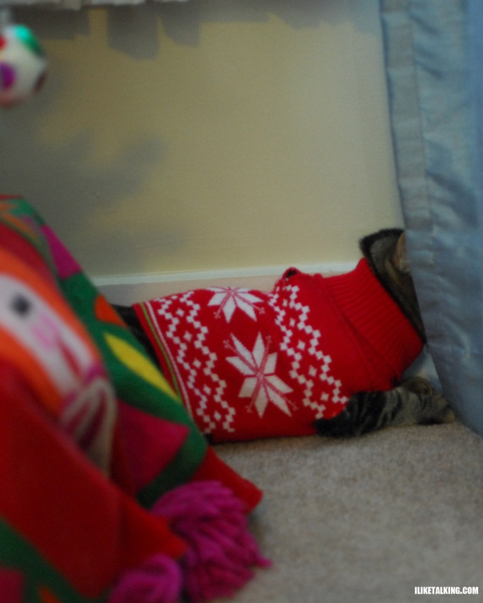clothed-cat-hiding