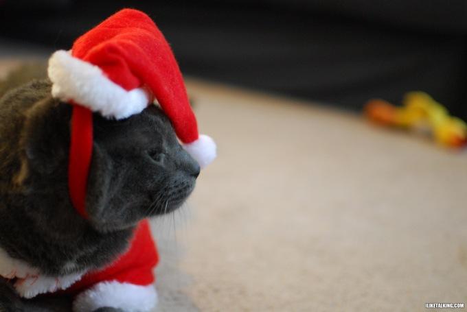 disgruntled-cat-santa-hat