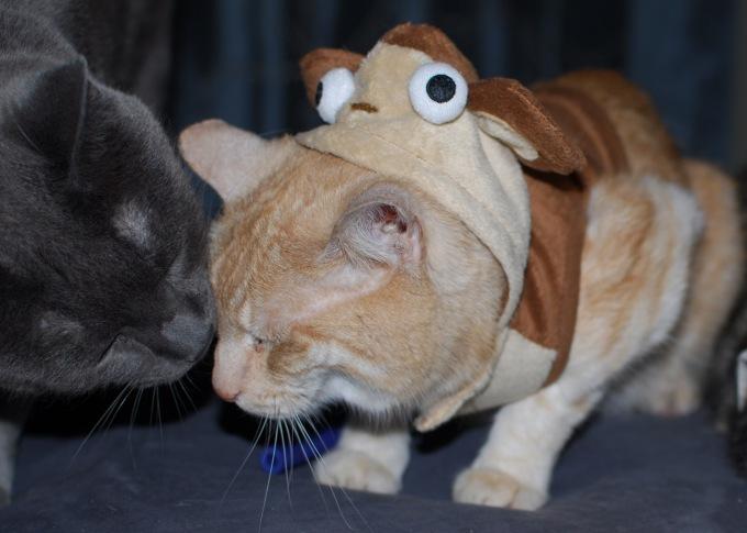 RUOK_Milo_Cat_Monkey_Iliketalking